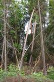 fallna trees Arkivbild