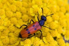 Fallo de funcionamiento rojo en la flor amarilla Foto de archivo libre de regalías