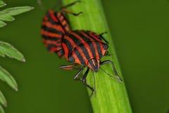 Fallos de funcionamiento y escarabajos Imágenes de archivo libres de regalías