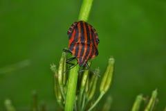 Fallos de funcionamiento y escarabajos Imagenes de archivo