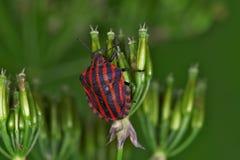 Fallos de funcionamiento y escarabajos Fotografía de archivo libre de regalías