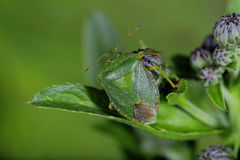 Fallos de funcionamiento y escarabajos Fotos de archivo libres de regalías