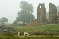 Fallow deer in front of ruins Royalty Free Stock Photo