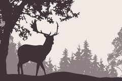 Fallow deer standing under a deciduous tree with coniferous fore Royalty Free Stock Photo