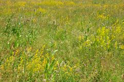 Fallow land. Colorful and crisp image of fallow land royalty free stock photography