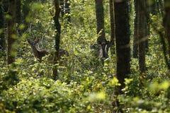 Fallow park deer in Dartington Deer Park grounds. Herd of peaceful grazing fallow deer on a cold March day stock photos