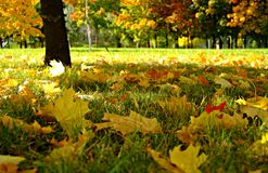 fallpark Royaltyfri Fotografi