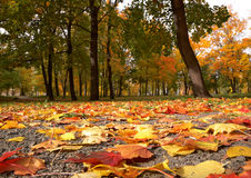 fallpark Royaltyfria Bilder