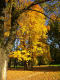 fallpark Royaltyfri Foto