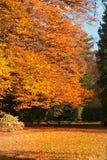 fallpark Arkivfoto