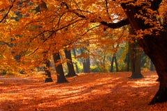 fallpark Arkivbilder