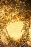 fallramväxter Arkivfoton