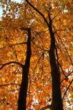 fallsäsongtree Arkivfoton
