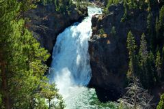 Falls. At Yellowstone National Park royalty free stock photos