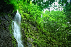 Falls. Mountain falls in Central Balkan National Park in Bulgaria royalty free stock photography