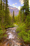 Falls in the Canadian Rockies Stock Images