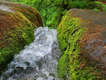 Falls in Carpathians Stock Images