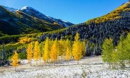 Falls color in Colorado mountain Stock Image