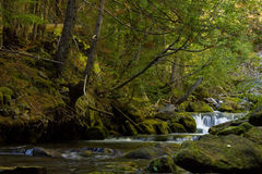 Falls in a coniferous forest. Small falls through mossy rocks in a coniferous forest Stock Photos