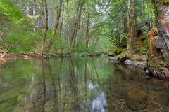 Falls Creek Forest Stock Photo