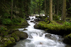 Falls In Wood, The Mountain River Royalty Free Stock Photo