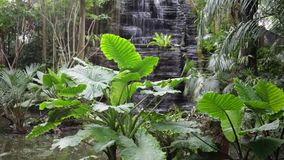 Falls in the jungle Royalty Free Stock Photo