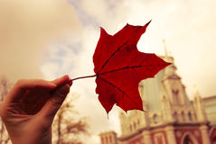 Falls leaf Royaltyfri Bild