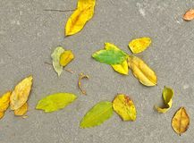 Falls. Leafs on the floor Royalty Free Stock Photography