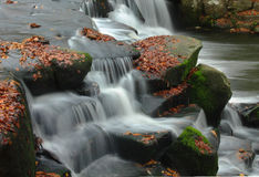 Falls of leaves Stock Photo