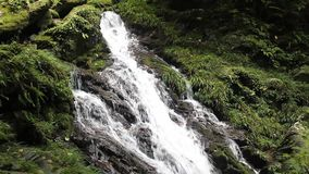 Falls in the original forest stock footage