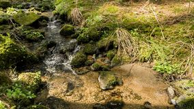 Falls on the small mountain river in a forest stock footage