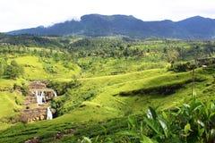Falls St. Clair and tea plantations, Ceylon Stock Photo