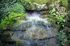 Falls with  steam, tropical  plants, water streams Stock Images