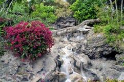 Falls in Tenerife Stock Images