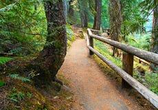Falls Trail. Trail to Koosah falls - McKenzie River - OR Stock Images