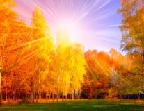 Falls Tree and Sun woodland Stock Image