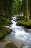 Falls in wood, the mountain river Stock Image