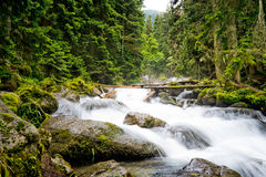 Falls in wood, the mountain river Royalty Free Stock Images