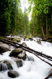 Falls in wood, the mountain river Royalty Free Stock Photos