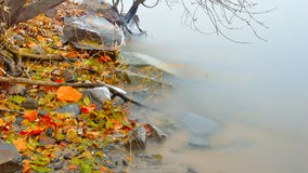 FallScape. This photograph shows a quiet calm riverbed with colorful fallen leaves Stock Image