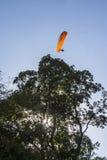 Fallschirmspringer oder Gleitschirm fliegt leicht oben in den blauen Himmel über den hohen Bäumen Lizenzfreies Stockfoto
