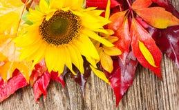 Fallsonnenblumen und -blätter Lizenzfreie Stockfotografie