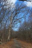 Fallspur Stockbild