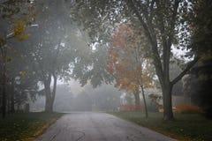 Fallstraße mit Bäumen im Nebel Stockbilder