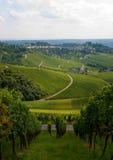 fallstuttgart vingård Arkivfoto