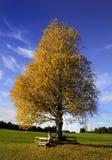 Falltree och bänk Arkivbild