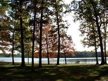 falltrees Arkivfoton