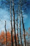 falltrees Royaltyfria Bilder