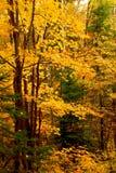 Fallwaldhintergrund Stockbilder