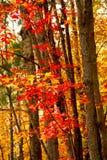Fallwaldhintergrund Stockbild